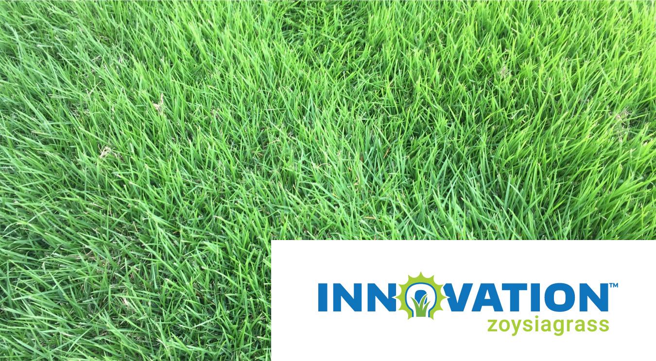 Inovation Zoysiagrass